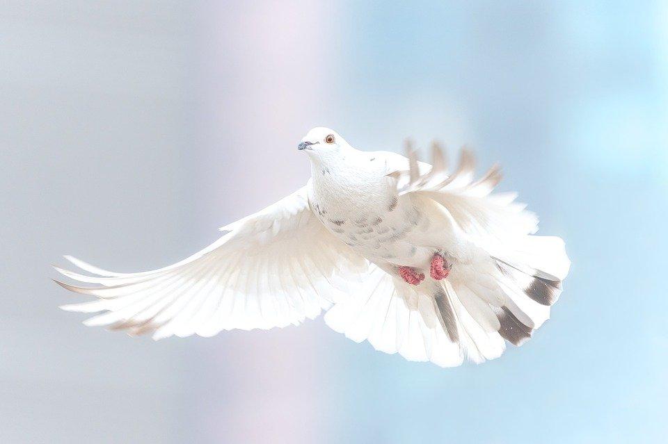 Un bianco uccello in volo a simboleggiare i beati su questa terra secondo gli Angeli