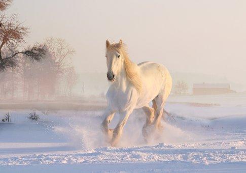 Cavallo bianco galoppa sulla neve