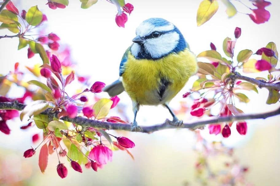 un uccellino colorato posato su un ramo