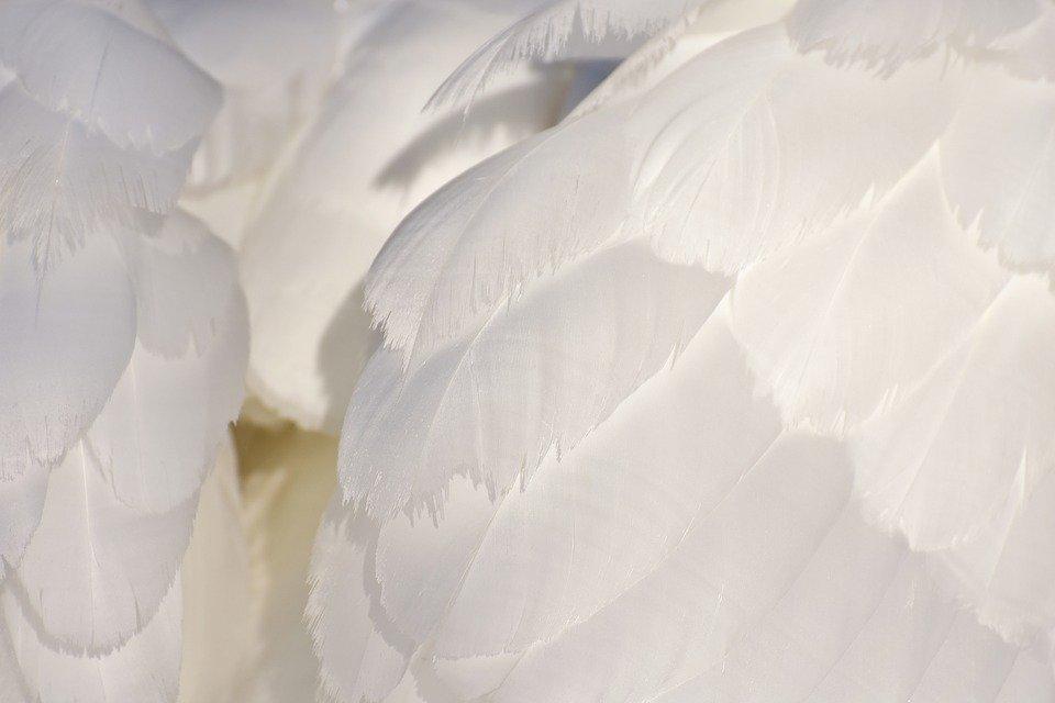 Ali bianche angeliche per immergersi nel nostro essere profondo e ritrovare la nostra forza